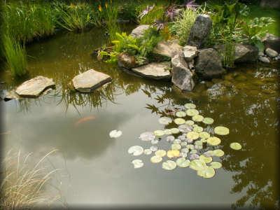 Jardin_marais_2007_bassin